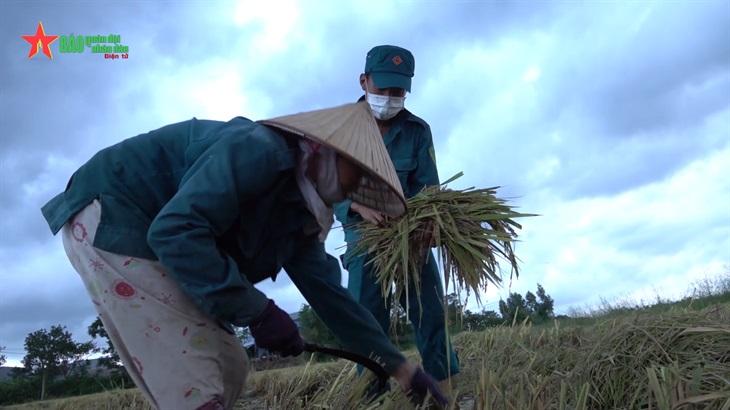 """Chiến sĩ """"sao vuông"""" giúp dân gặt lúa"""