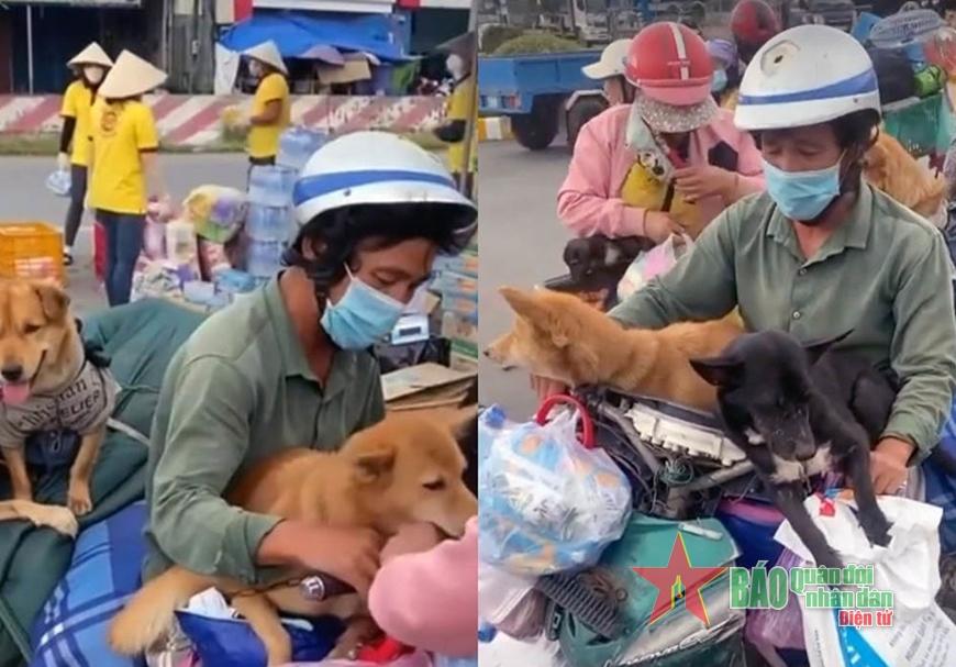 Từ vụ tiêu hủy đàn chó ở Cà Mau: Cần có quy định chặt chẽ cả về pháp lý và dịch tễ